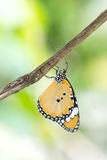 Yellow black pattern butterfly on branch Stock Images