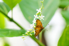 Yellow black pattern butterfly on bunch Royalty Free Stock Photos