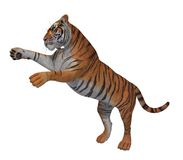 Yellow black striped pouncing tiger 300 dpi Royalty Free Stock Images