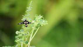 Yellow and black wasp. On nature background stock photo