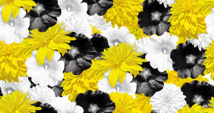 Yellow, black, white flowers. Seamless flower pattern. Mallow and Rudbecka Royalty Free Stock Image