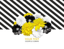 Yellow, black, white flowers on striped background. Bright flower banner Royalty Free Stock Image