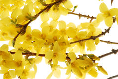 Yellow Bloom royalty free stock photography