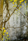Yellow blossom with grunge wall background Stock Image
