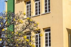 Yellow blossom Stock Photos
