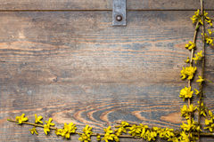 Yellow blossoms on a wooden chest Royalty Free Stock Images