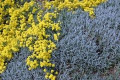 Yellow blue Stock Photo