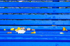 Yellow and blue Stock Photography
