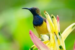 Yellow Blue and Brown Bird on the Top of Yellow Petaled Flower Photography Royalty Free Stock Image