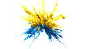 Yellow blue Color Burst smoke powder explosion fluid ink particles alpha matte stock video footage