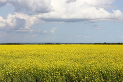 Yellow blue color in nature. Photo yellow field and blue sky symbolizing the national flag of Ukraine royalty free stock photos