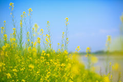 Yellow Blue Green Royalty Free Stock Photo