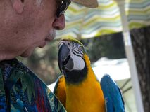 A Man and his parrot communicating with a whisper Royalty Free Stock Images