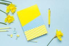 Yellow-blue notebook, pen, clips, spring flowers daffodils narcissus on blue background. Female desktop, Office desk, spring. Concept. Flat lay, top view, copy royalty free stock images