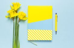 Yellow-blue notebook, pen, clips, spring flowers daffodils narcissus on blue background. Female desktop, Office desk, spring. Concept. Flat lay, top view, copy stock images
