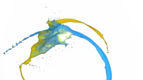 Yellow and blue paint in super slow motion splashing. Against a white background stock video footage