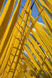 Yellow and blue palm leaf abstract Stock Photos
