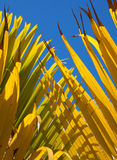 Yellow and blue palm leaf abstract Royalty Free Stock Images