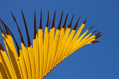 Yellow and blue palm leaf abstract Royalty Free Stock Photos
