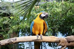 Yellow And Blue Parrot Perched On Tree Stock Photography