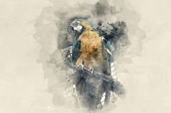 Yellow-blue parrot. Watercolor background Stock Image
