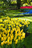 Yellow, blue and red spring flowers. In park on april morning Royalty Free Stock Image