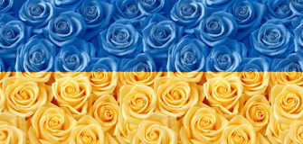 Yellow blue roses seamless pattern stock images