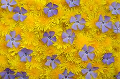 Yellow-blue spring background Royalty Free Stock Photos