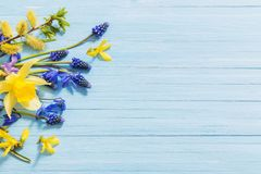 Yellow and blue spring flowers on wooden background. The yellow and blue spring flowers on wooden background royalty free stock image