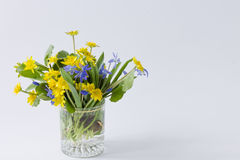 Yellow and blue spring primroses in a transparent glass on a lig stock photo