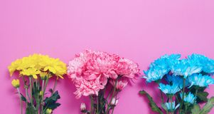 Yellow and blue summer flowers composition isolated on pink background. Mother and women day. Valentine holidays concept. Top view. And copy space. Banner mock stock images