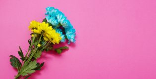 Yellow and blue summer flowers composition isolated on pink background. Mother and women day. Valentine holidays concept. Top view. And copy space. Banner mock royalty free stock image