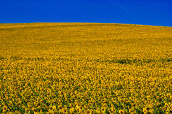 Yellow and blue Royalty Free Stock Images
