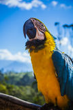 Yellow Blue and White Parrot at Daytime Royalty Free Stock Image