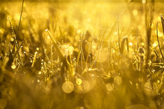Yellow blur background from a grass on a field Stock Photos