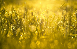 Yellow blur background from a grass on a field Royalty Free Stock Images