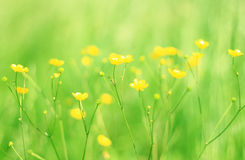 Yellow blured flowers Royalty Free Stock Photography