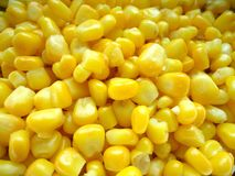 Yellow boiled corn for a healthy meal stock photography