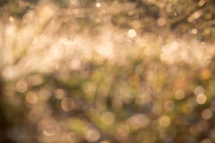 Yellow bokeh from grass, background, blur Stock Photography