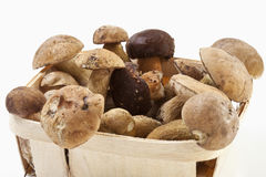 Yellow boletus in basket, close up Stock Image