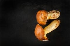 Yellow boletuses mushrooms close up Royalty Free Stock Photos
