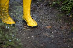 Yellow boots in a muddy puddle at a rainy day Royalty Free Stock Photo