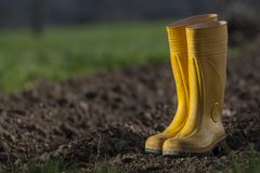 Yellow boots Royalty Free Stock Photo
