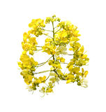 Yellow bouguet flowers Royalty Free Stock Photos