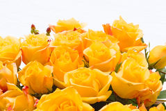 Yellow bouquet of roses Royalty Free Stock Photo