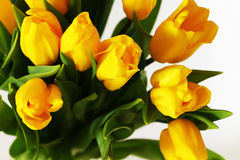 Yellow bouquet of tulips flowers Stock Photography