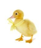 Yellow bow royalty free stock images