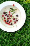 Yellow bowl with sweet cherries on a grass Royalty Free Stock Photo
