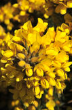 Yellow bracken Stock Photo