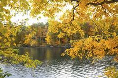 Yellow branches of autumn frame the Farmington River, Canton, Co. Branches with fall foliage form a veil on the Farmington River in the Collinsville section of Royalty Free Stock Photos
